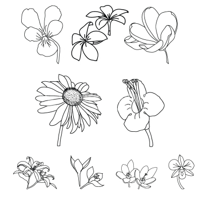 Floral ornaments in vector format