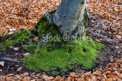 Tree roots with green moss