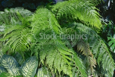 Green fern thicket in forest background