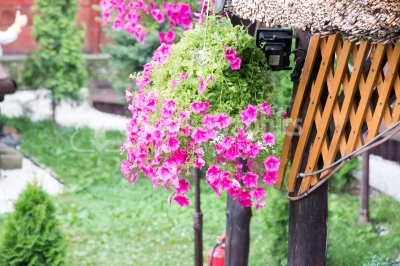 Pretty pink flowers in hanging basket