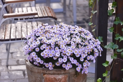 Small decorative purple flowers