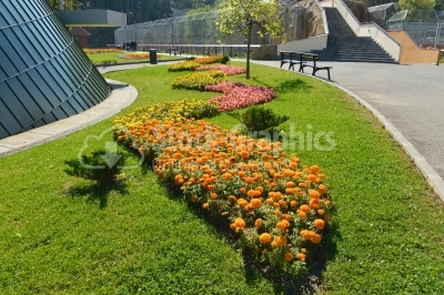 Picture of landscape garden