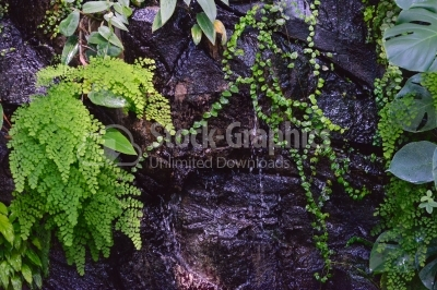 Waterfall with fern on wall