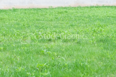 Perspective green grass texture background, Natural background