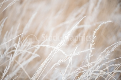 Hoarfrost.  Winter abstract macro