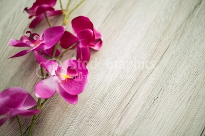 Beautiful purple phalaenopsis flowers