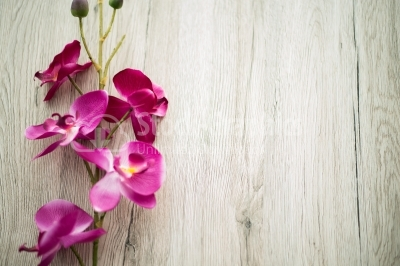 Beautiful purple phalaenopsis flowers on wooden table