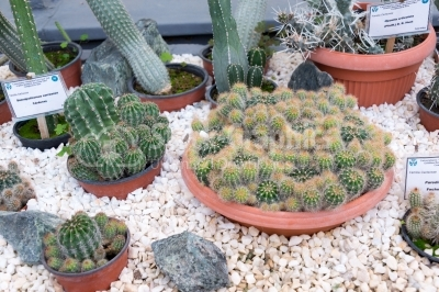 High Angle View of different species of cacti