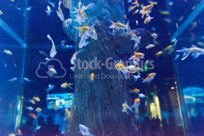 Shoal of fishes undersea