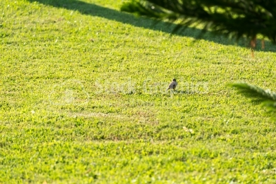 Bird on the lawn