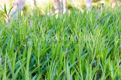Textured green grass