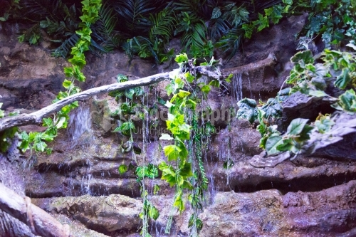Fresh waterfall with growing ivy, fern and moss