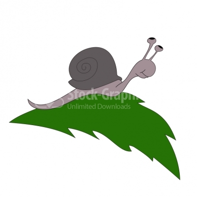 Snail on green leaf - Illustration