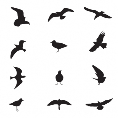 Bird silhouette - Illustration