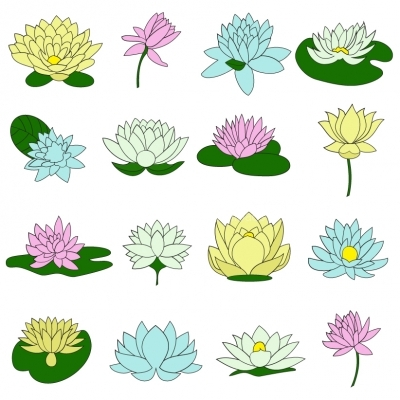 Water lily flower set Illustration