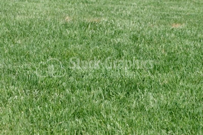 Real English grass texture