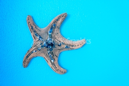 Blue decorated star fish