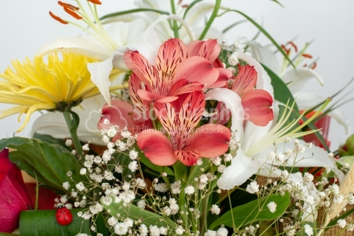 Bouquet of bright flowers isolated on white