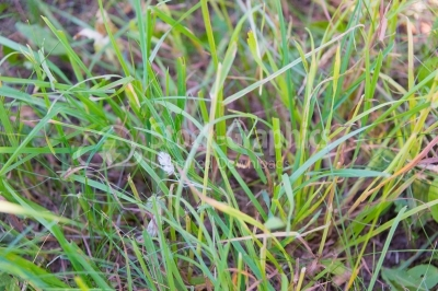 Close-up of green grass