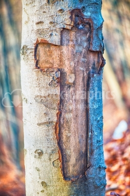 Cross carved in tree bark