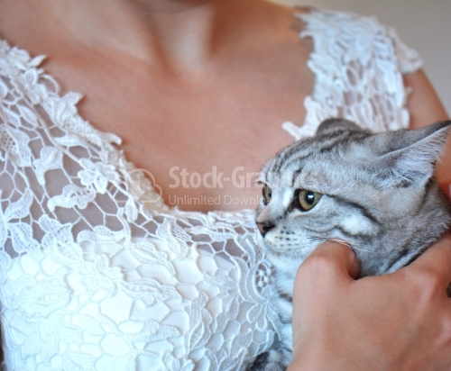 Cute cat on a bride's hand