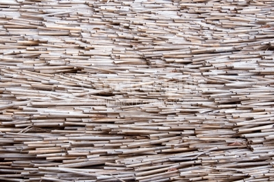 Dry reed texture background