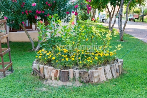 Flowerbed surrounded by wood
