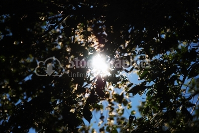 Forest with the sun behind - Stock Image