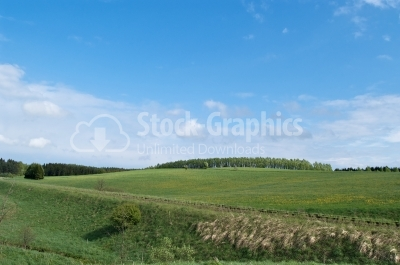 Fresh green grass with bright blue sky - Stock Image