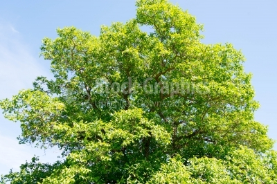Green tree on a sunny day