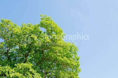 Green tree on the sky