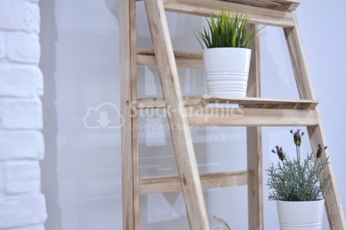 Houseplant on a wood ladder