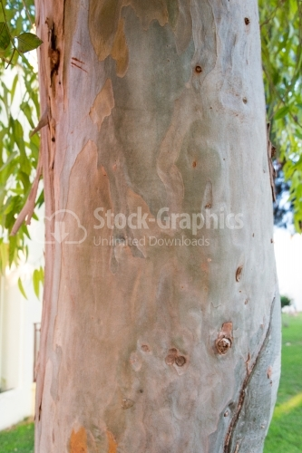 Macrophotography with a tree bark on foreground