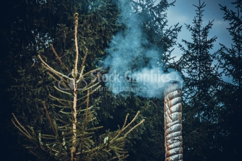 Old chimney in a pine forest