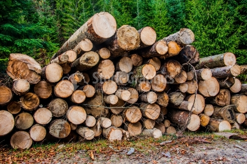 Pile of wood with green leaves, Trunk of tree, Timber is cut and