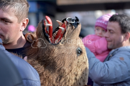 Real bear head, used for costume. The annual Winter Traditions and Customs Festival