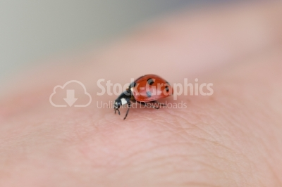 Red ladybug on woman hand ladybird human skin nature spring