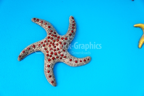 Red-dotted sea star
