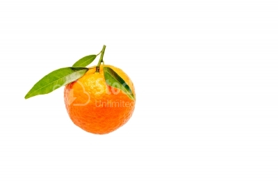 Ripe mandarines with leaves close-up on a white background. T