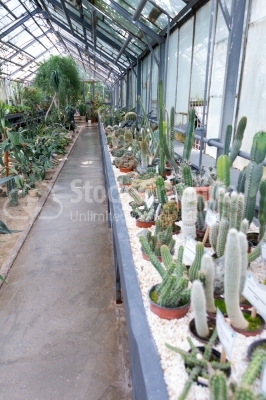 Section of cactuses at the botanical garden