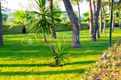 Trimmed ornamental Garden