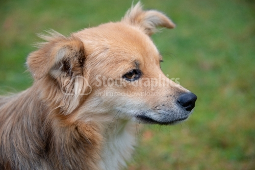 Young dog portrait